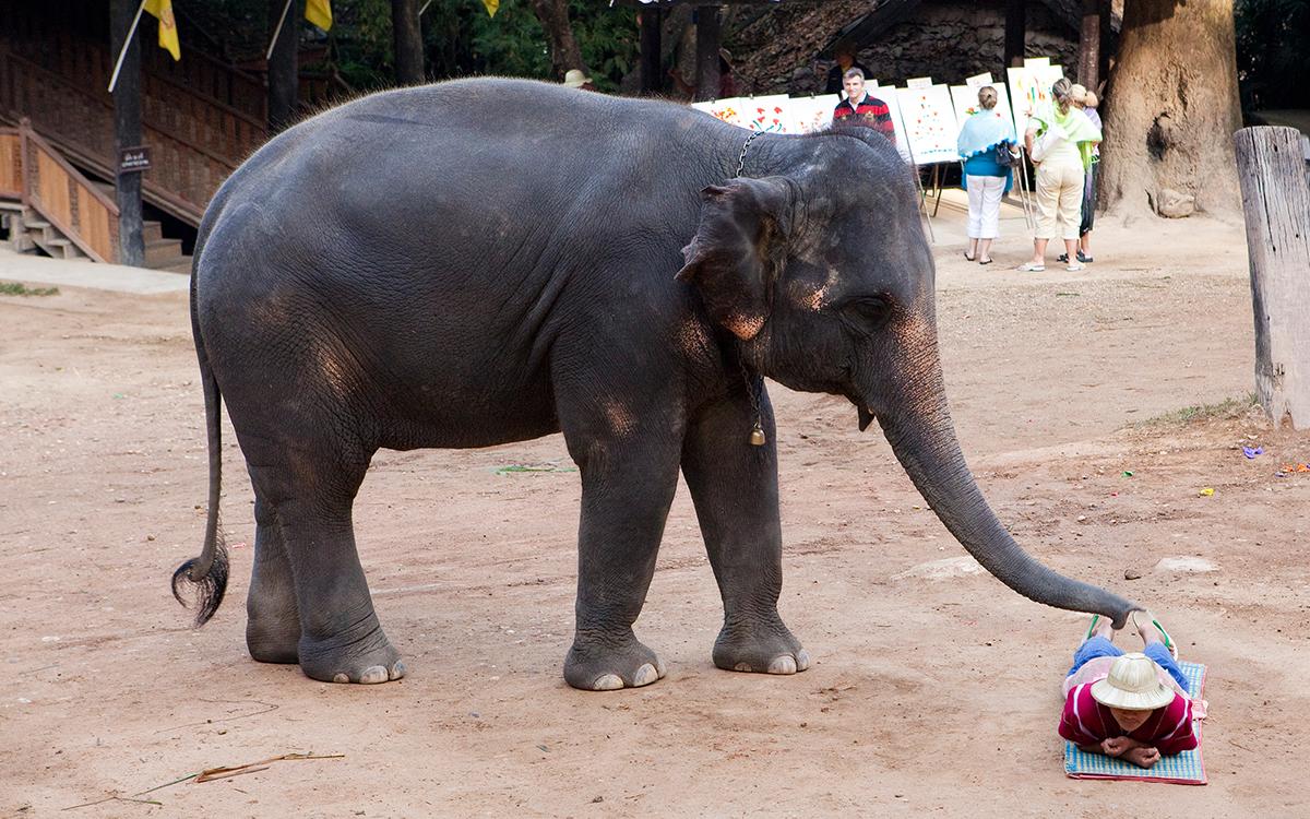 elephant-massage-thailand1215