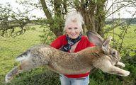 (عکس) چه کسانی بزرگترین خرگوش جهان را دزدیدند؟