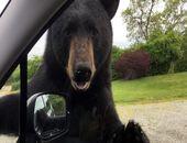 (ویدیو) درخواست عاجزانه یک خرس برای غذا دادن به فرزندش!