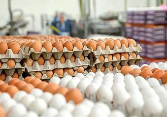 تخم مرغ هر روز گران تر از دیروز!